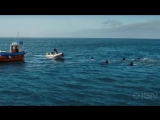 Глубокое синее море 2 (Deep Blue Sea 2) 2018, трейлер