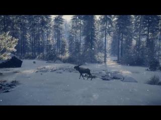 Трейлер новой территории Медвежья тайга для игры theHunter: Call of the Wild!