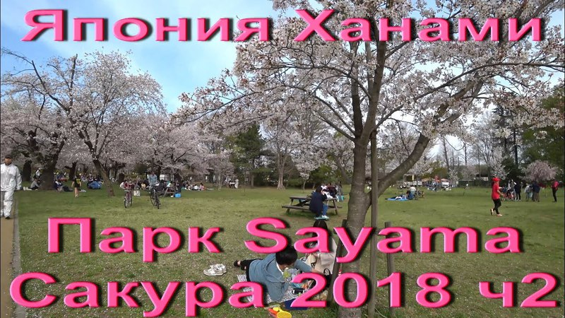 Япония Ханами 2018 Парк Sayama Пикники в парке. Как отдыхают японцы весной Hanami in japan ч.2
