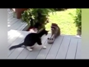 СМЕШНОЕ ВИДЕО ПРО КОШЕК 2016_ FUNNY VIDEOS ABOUT CATS 2016