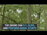 Обнаружен новый вид птиц, весит всего 9 грамм, летает со скоростью 20 км.ч, может находиться в воздухе до 10 минут. А потом подз