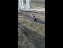 CE_Video_1519289145686.mp4