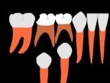 Сменный прикус. Пропедевтика ортодонтии