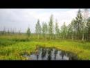 Васюганские болота одни из самых больших болот в мире yklip scscscrp