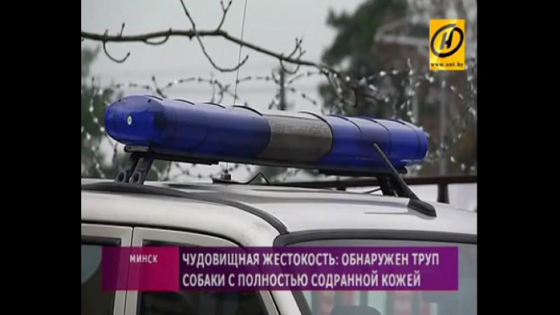 На окраине Минска нашли труп собаки с полностью содранной кожей