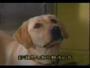 Т/С Злоключения Росинанта, моей любимой собаки 6 серия 2001г