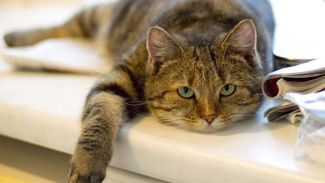 Кошачий грипп - симптомы и лечение новые фото