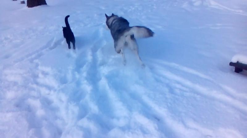 Снежная собака и разборки в Бронксе