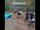 OFF Vine Balamut