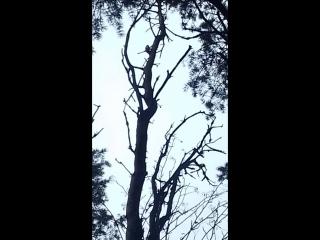 Дятел на дереве.