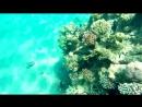 GoPro 2017 Holiday in Eilat Coral Beach Израиль АВРТур