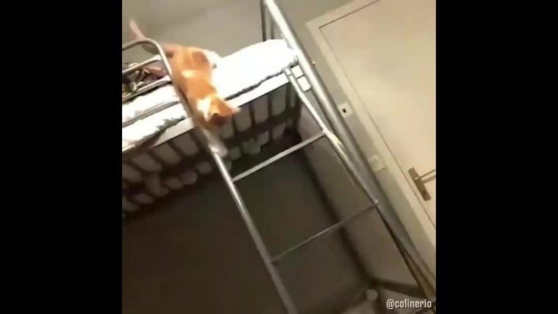 Грация кошки, ловкость картошки
