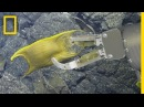 Rare Video: Deep-Sea Creature Incubates Eggs on Hydrothermal Vents   National Geographic
