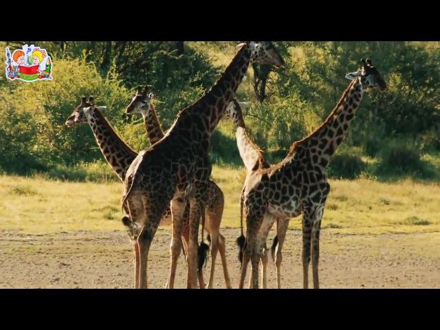 Животные Африки и Южных стран - Развивающее видео для детей по методике Домана. HD качество.