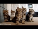 Смешные Кошки хор Танцы кордебалета милых котят