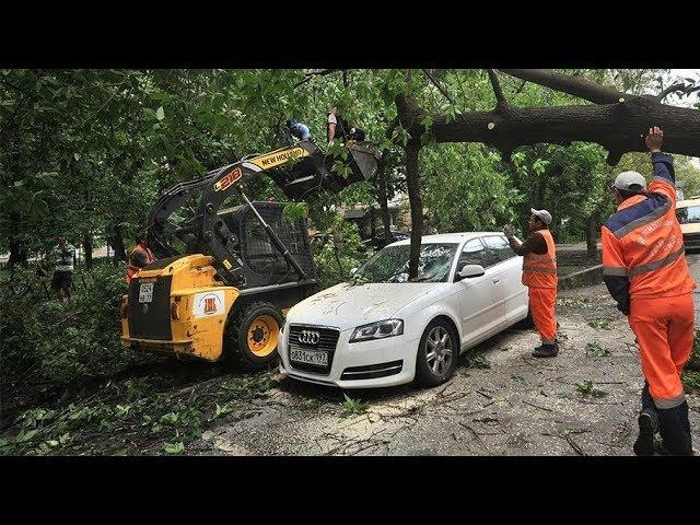 Автомобили против деревьев. Вечное противостояние - кто кого?