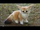 Baby Animals 🔴 Animales Bebés Animal Planet Videos