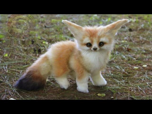 Baby Animals 1 🔴 Animales Bebés | Animal Planet Videos (2018)