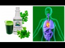 Хлорофилл жидкий - польза, отзывы, применение, состав.