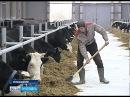 В Угличском районе ввели в эксплуатацию молочно-товарную ферму