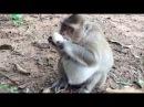 She Grab Egg From Seller and Eating, Monkeys 1071 Tube BBC