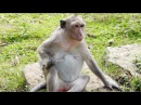 Who remember this monkey, she always sad