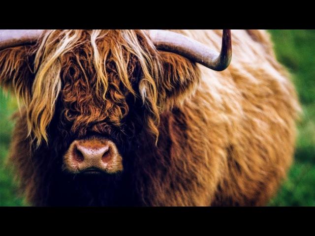 Шотландия, Соединённое Королевство.