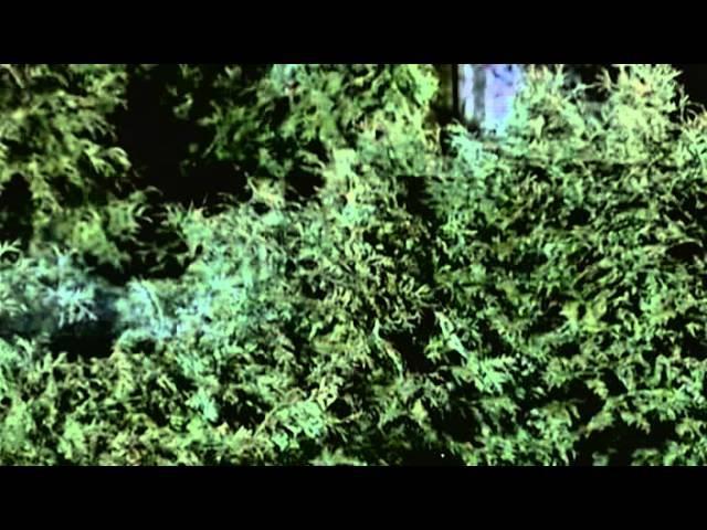 Застывшие депеши 12 серия (2010)