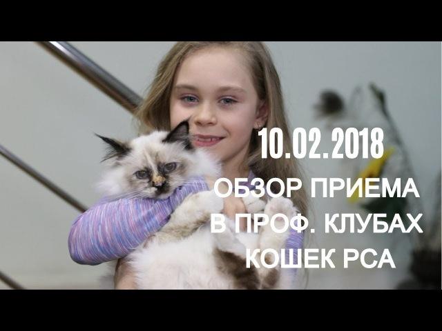 Прием в проф. клубах кошек PCA 10.02.2018г