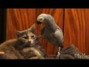 Смешное видео про животных Лучшие приколы про животных Улетные животные Смешно до слез.mp4