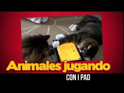 Animales jugando con iPads divertido y lindo