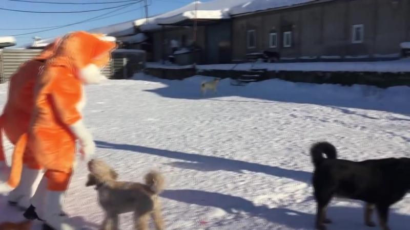 В Мурманске неизвестные рыжие «коты» оказали помощь Приюту