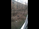 Дуров возвращает стену