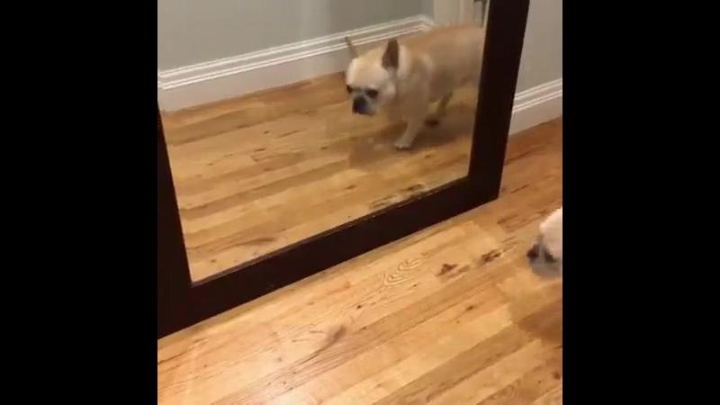 Женщины утром, когда видят себя в зеркало