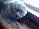 Самый_злющий_кот