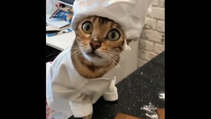 Кот-диверсант
