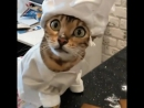 Кот диверсант