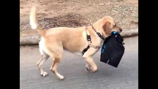 Animals Carrying Big Things - Funny and Cute Pets - Coconut Entertainment