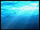 12 лет назад я в животе у мамы в г.Одессе на Чёрном море