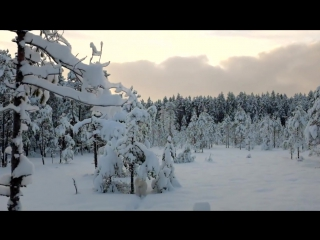 Свирский снежный лес