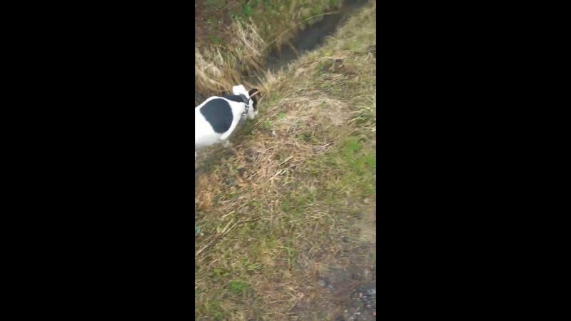 охота на лягушку передержкаспб догситтер