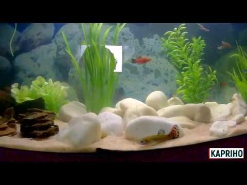 Реанимация декорация чистка аквариума своими руками