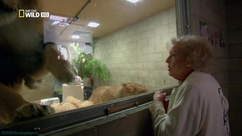 «Бетти Уайт — защитница больших кошек» (Документальный, природа, животные, 2013)