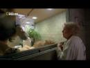 «Бетти Уайт — защитница больших кошек» Документальный, природа, животные, 2013