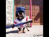 Собака, которая любит хоккей