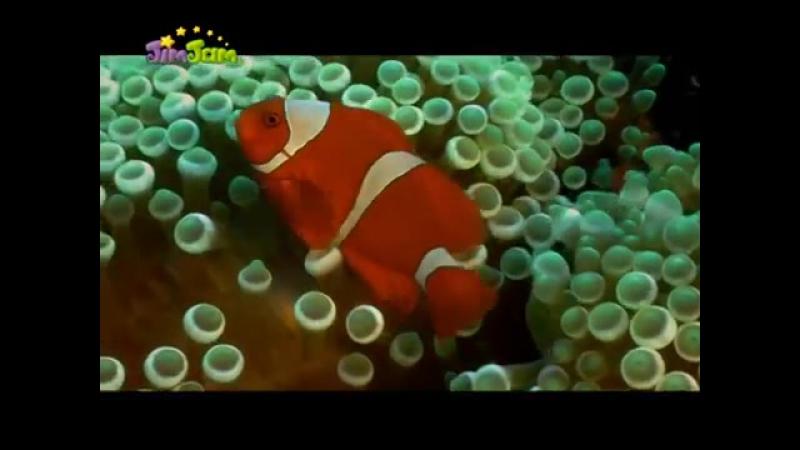 Семейство рыбы-клоуна. Документальный фильм.