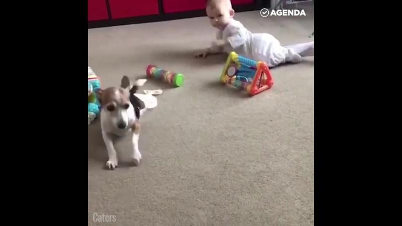 собака-воспитатель