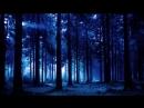 Выживание в Диком лесу
