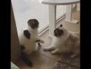 Жёлудь vs Одуванчик