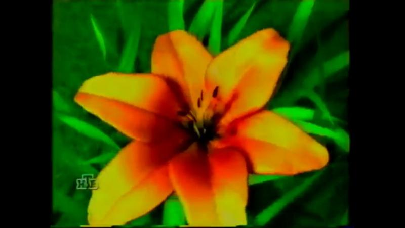 Перед и после рекламная заставка НТВ 1998 2001 Цветочный сад